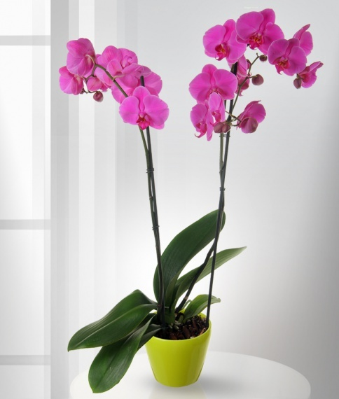Место для орхидеи